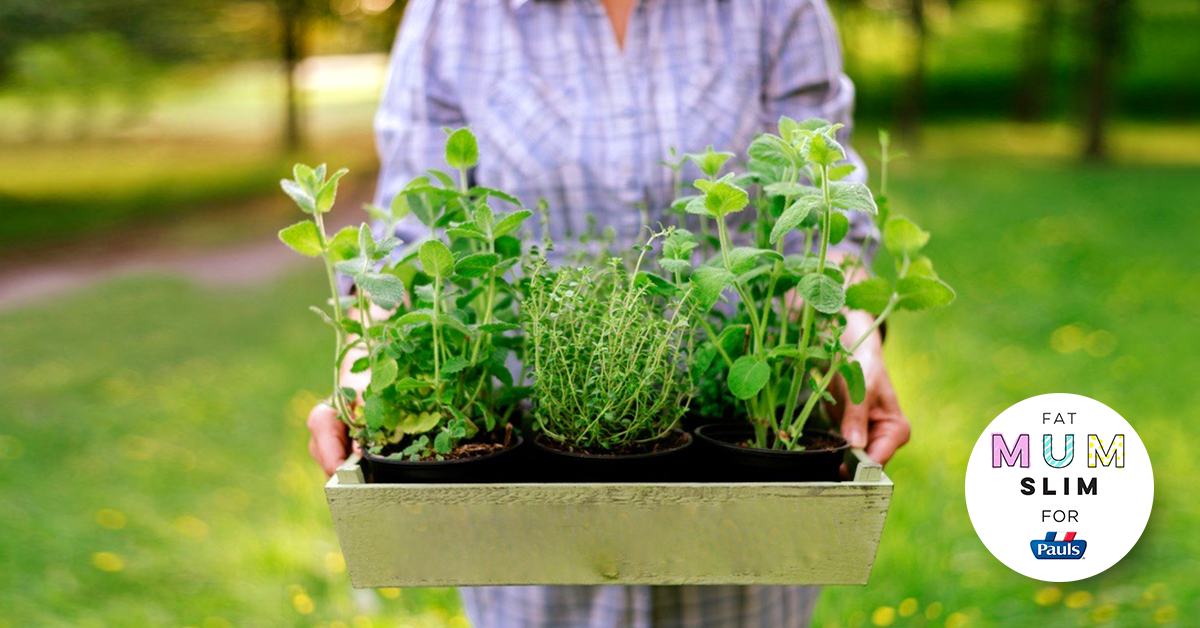 How to grow your own herb garden
